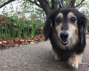 犬のフィラリア予防注射の値段や副作用について調べてみた
