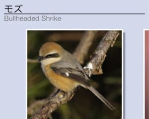 今鳴いている鳥の名前は?場所や季節や鳴き方から鳥の鳴き声を調べられる無料iPhoneアプリ「さえずりナビ」