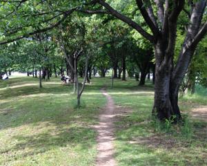 マラソンの川内優輝選手が監修するクロスカントリーコース2kmを歩いてみた(埼玉県・加須はなさき公園)